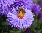 Alergia na bodnutie hmyzom